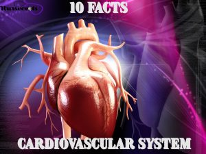 10 Facts About The Cardiovascular System Every Nursing Student Should Know