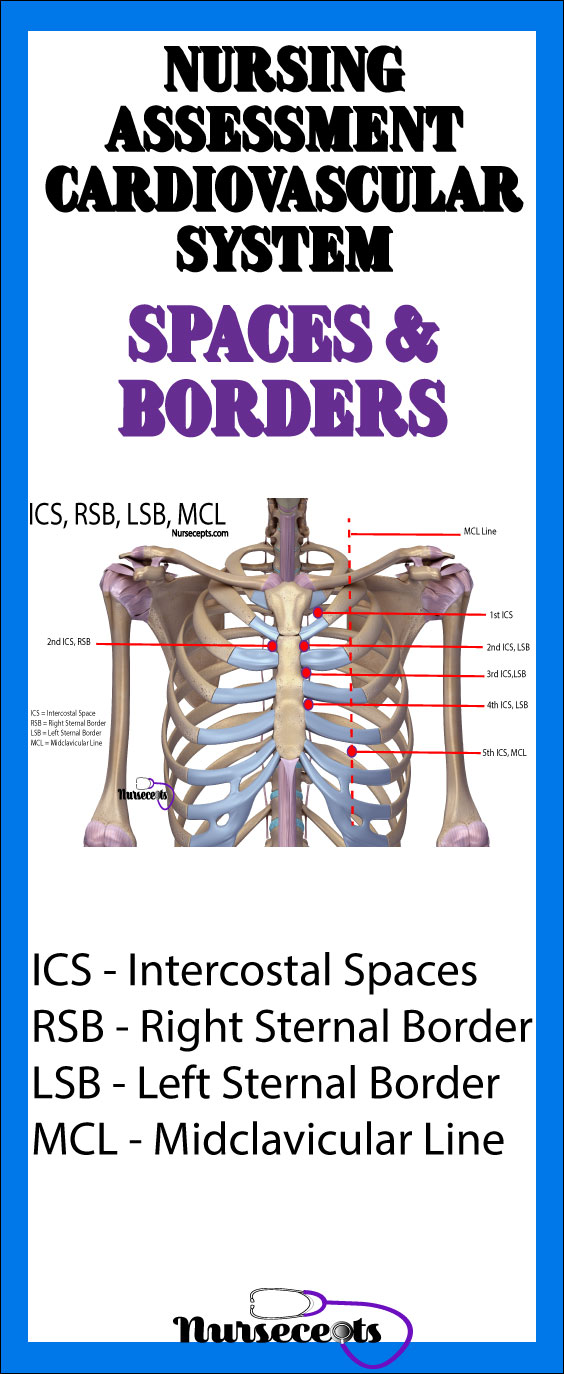 Nursing Assessment of the Cardiovascular System Spaces and Borders
