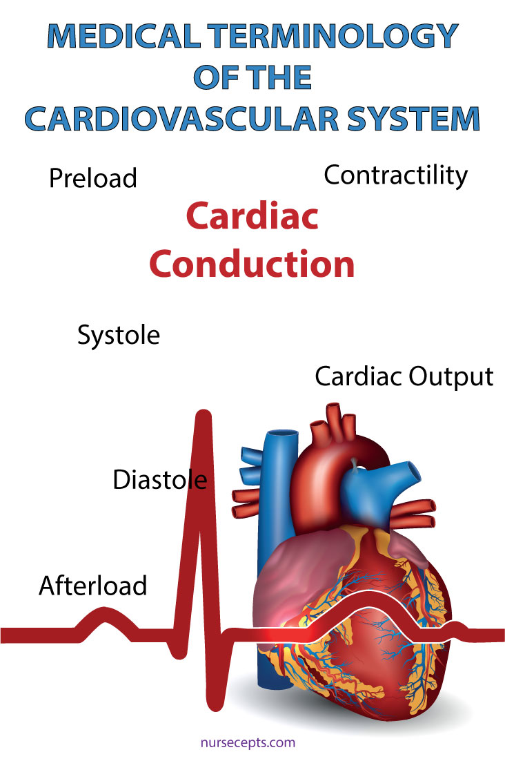 Medical Terminology Cardiovascular System Cardiac Conduction
