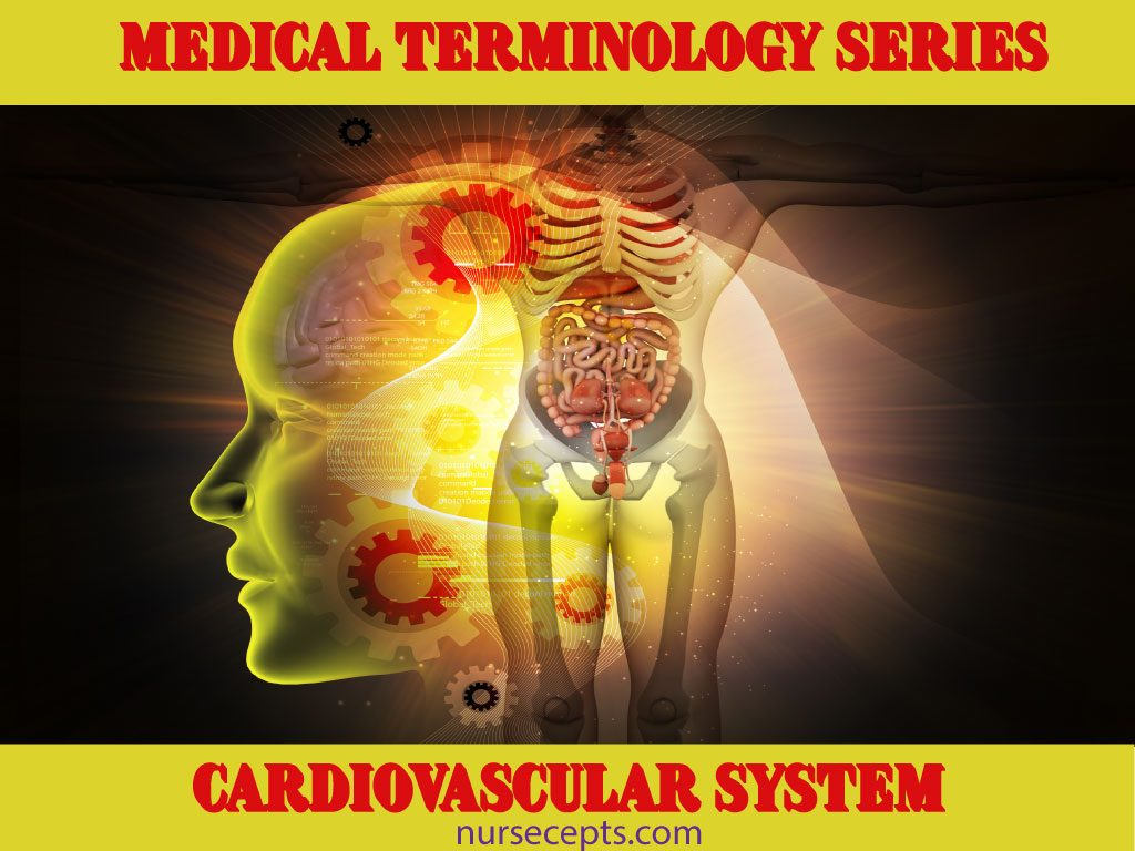 Medical Terminology of the Cardiovascular System