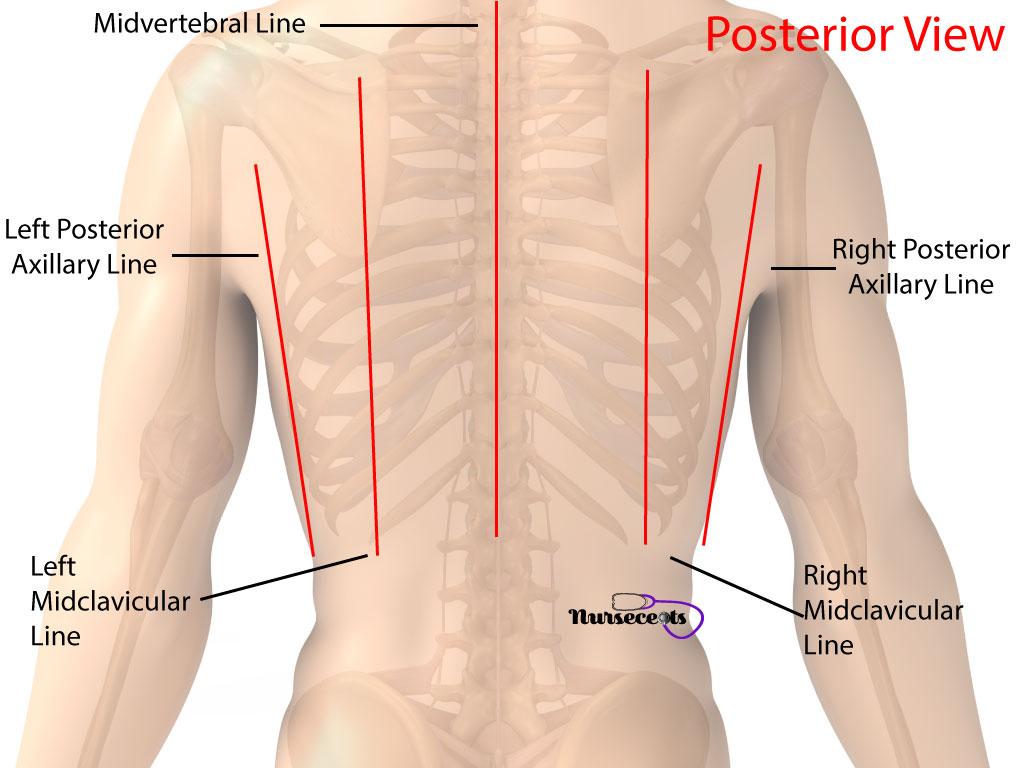 Nursing Health Assessment Respiratory System Imaginary Lines Posterior