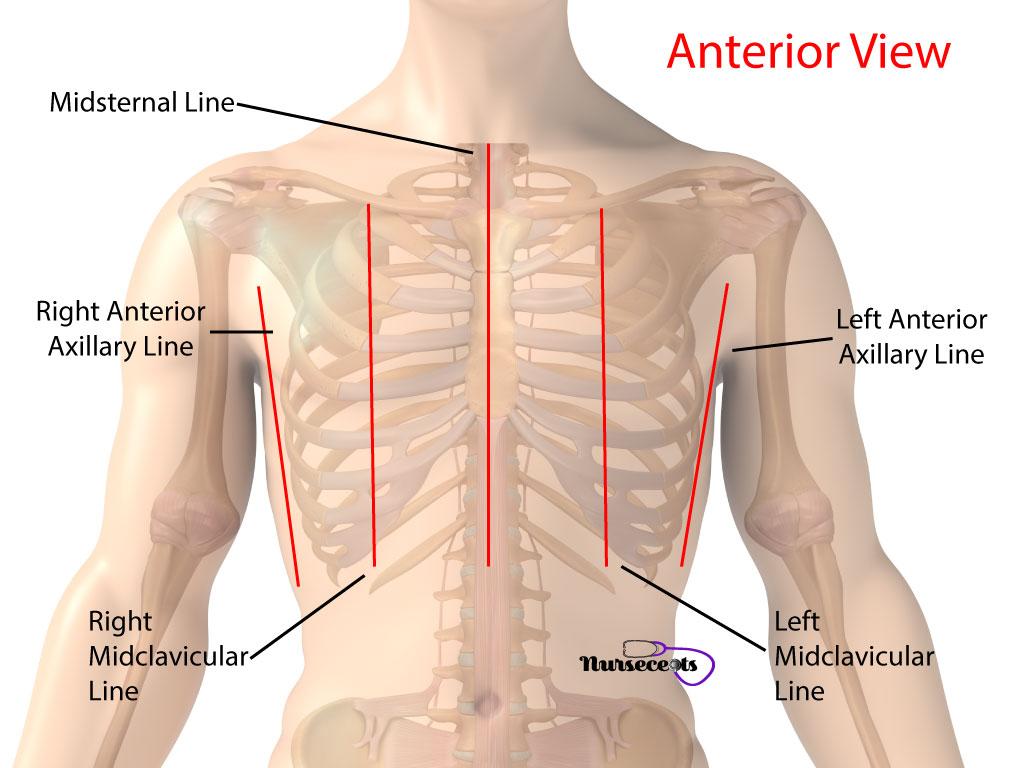 Nursing Health Assessment Respiratory Assessment Imaginary Lines Anterior