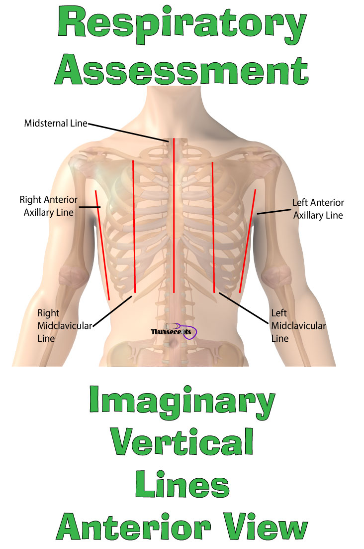 Respiratory Assessment_Imaginary Vertical Lines Anterior View