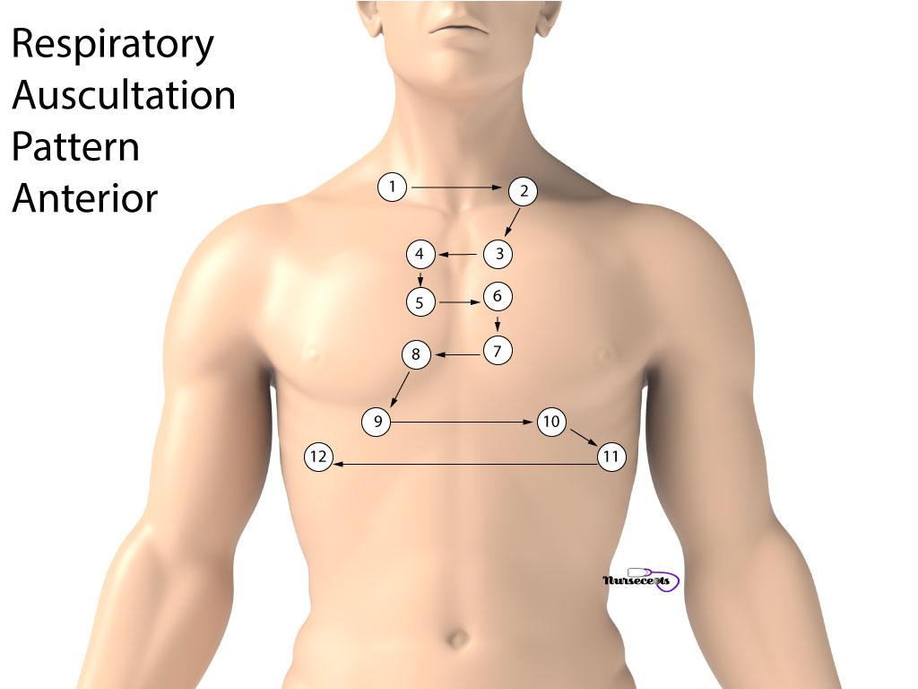 Respiratory Assessment Auscultation Pattern Anterior