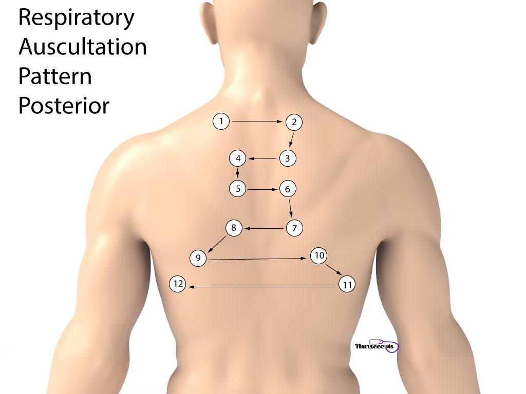 Respiratory Assessment Auscultation Pattern Posterior