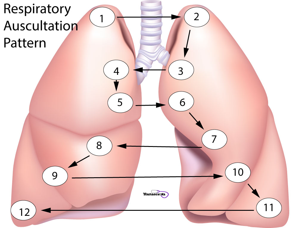 Respiratory Assessment_ Example of Auscultation Pattern