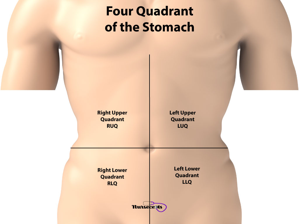 11 Facts About The Gastrointestinal System Every Student Should Know_Four Quadrants