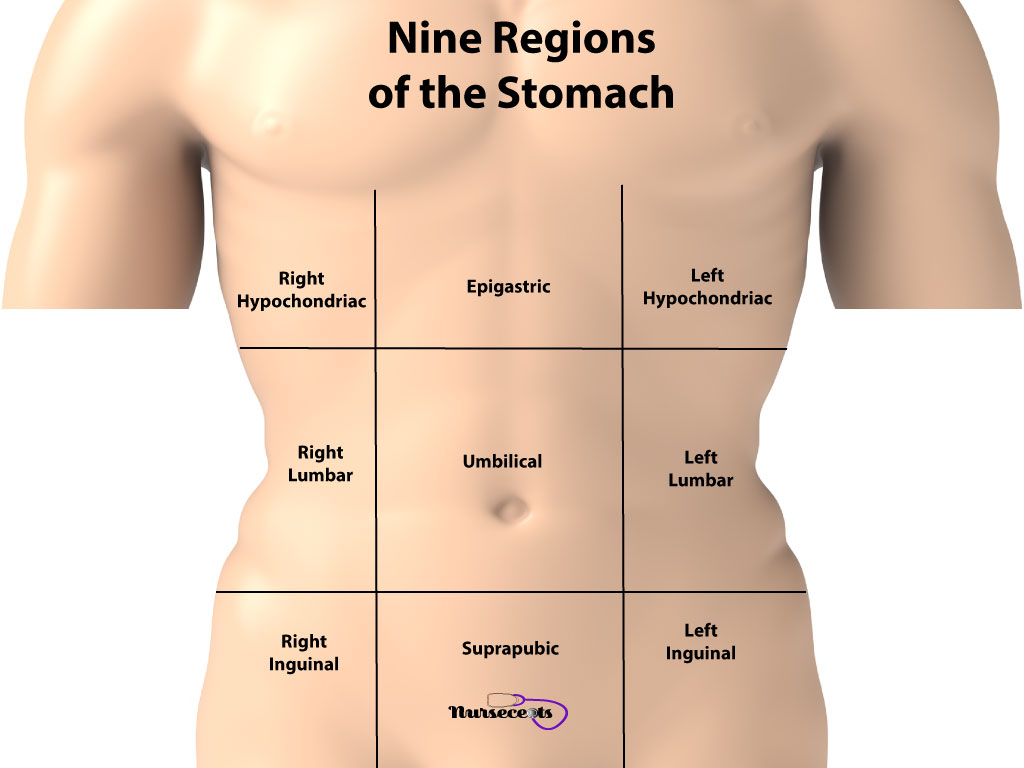 11 Facts About The Gastrointestinal System Every Student Should Know_Nine Regions