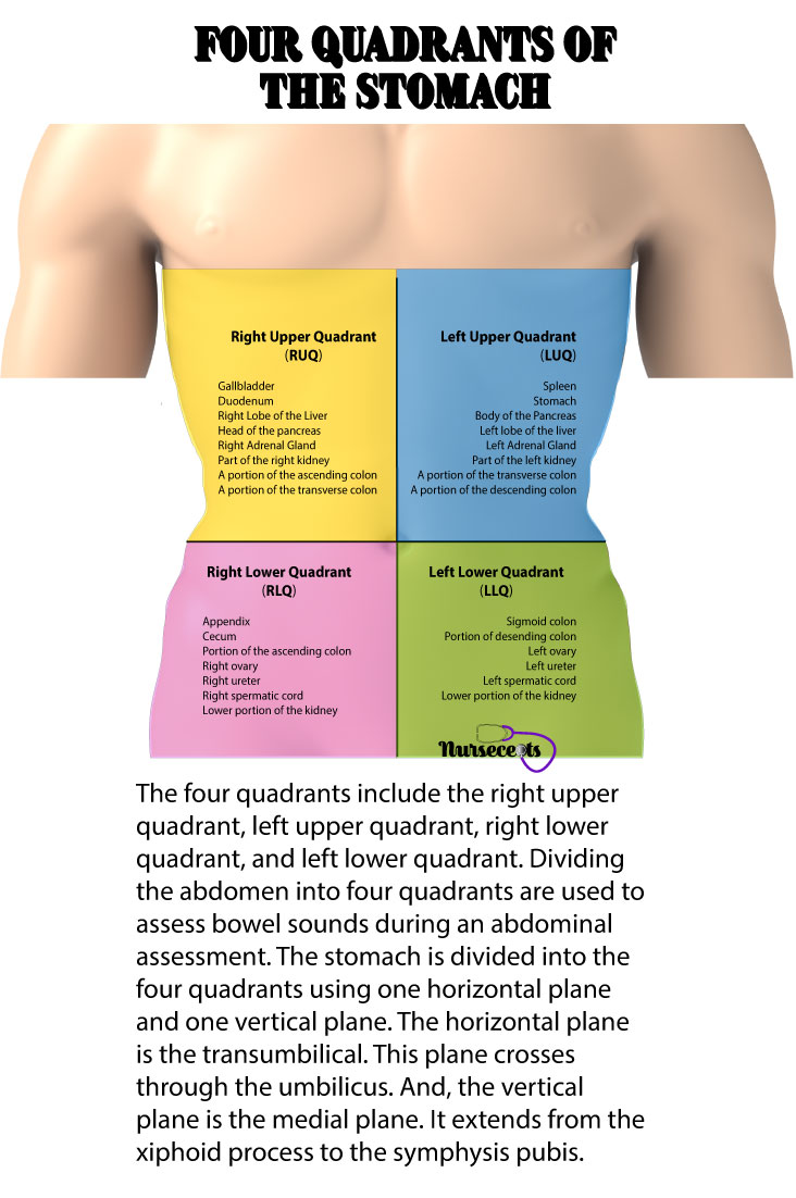 Gastrointestinal-Assessment_Four-Quads-with-Organs