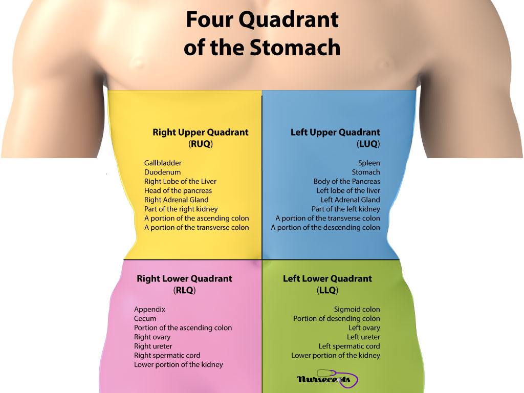 Gastrointestinal Assessment_Four Quadrant