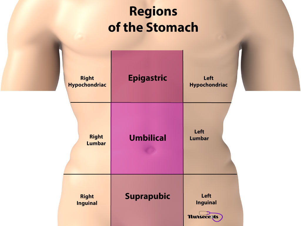 Gastrointestinal Assessment_Regions of the Stomach