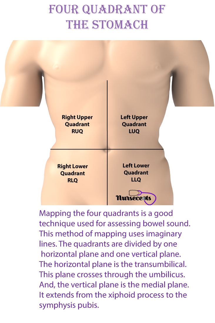 Gastrointestinal-System_Four-Quadrants