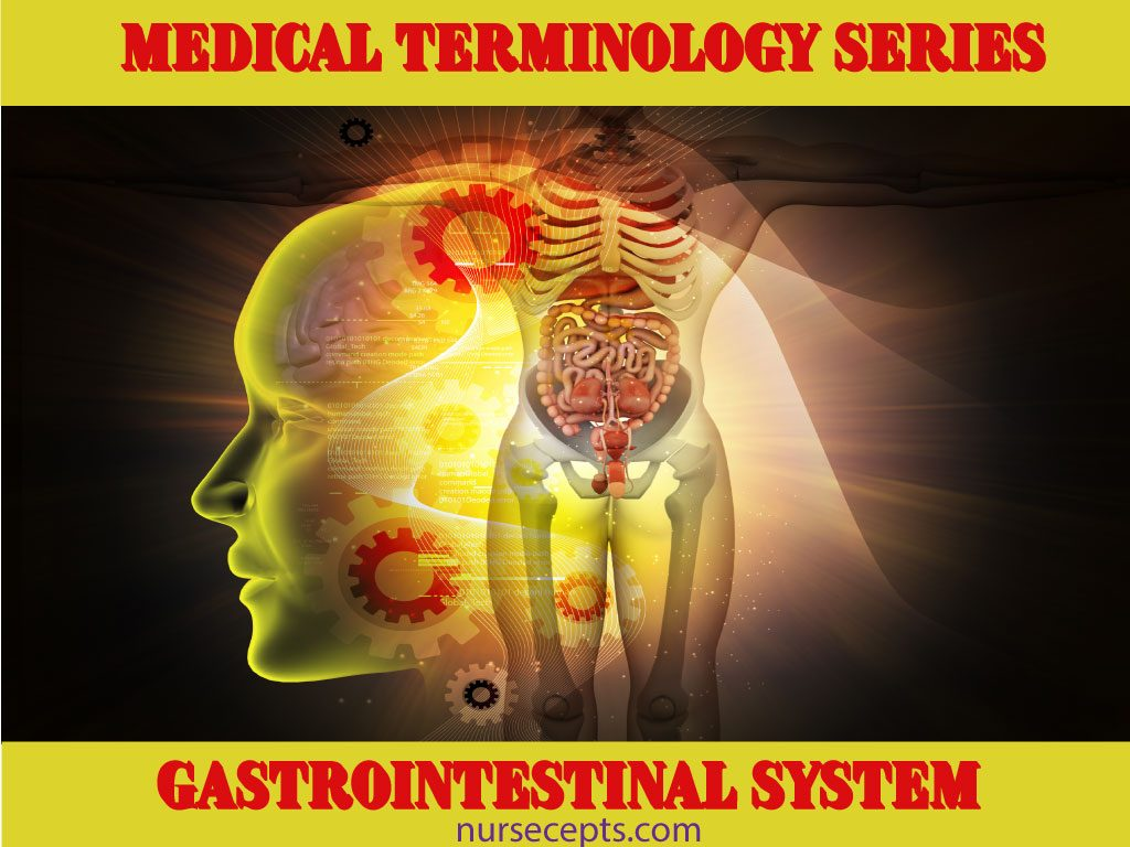Medical Terminology of the Gastrointestinal System