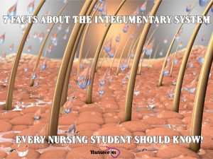 Read more about the article 7 Facts About the Integumentary System Every Nursing Student Should Know