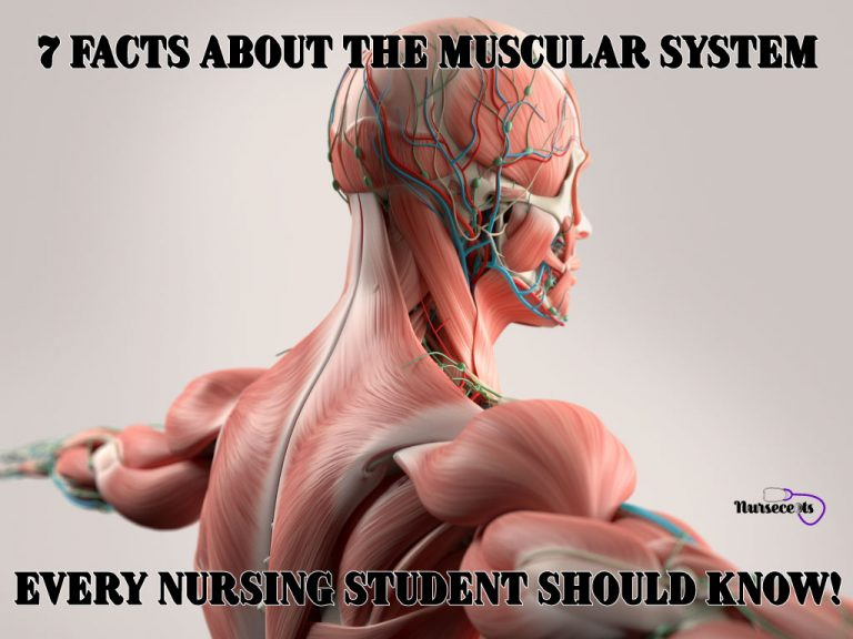 7-Facts-About-The-Muscular-System_Feature