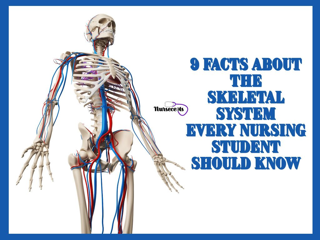 9 Facts About the Skeletal System Every Nursing Student Should Know.