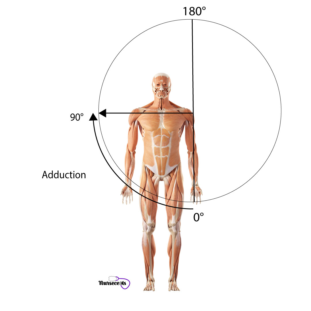 Assessment-of-the-Musculoskeletal-System_Adduction