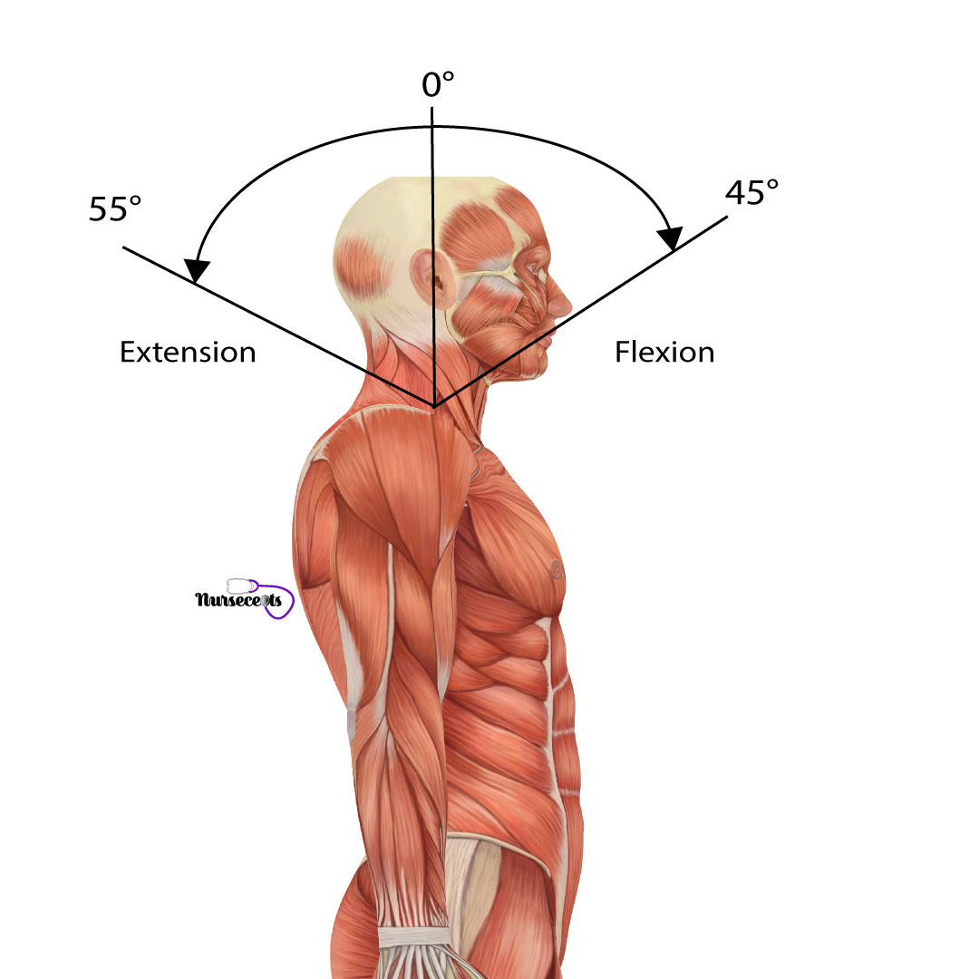 Assessment-of-the-Musculoskeletal-System_Cervical-Spine-Flexion-Extension
