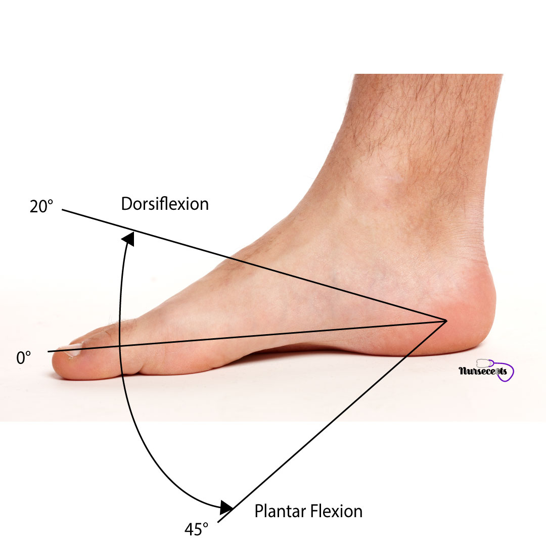 Assessment-of-the-Musculoskeletal-System_Dorsiflexion-Plantar-Flexion