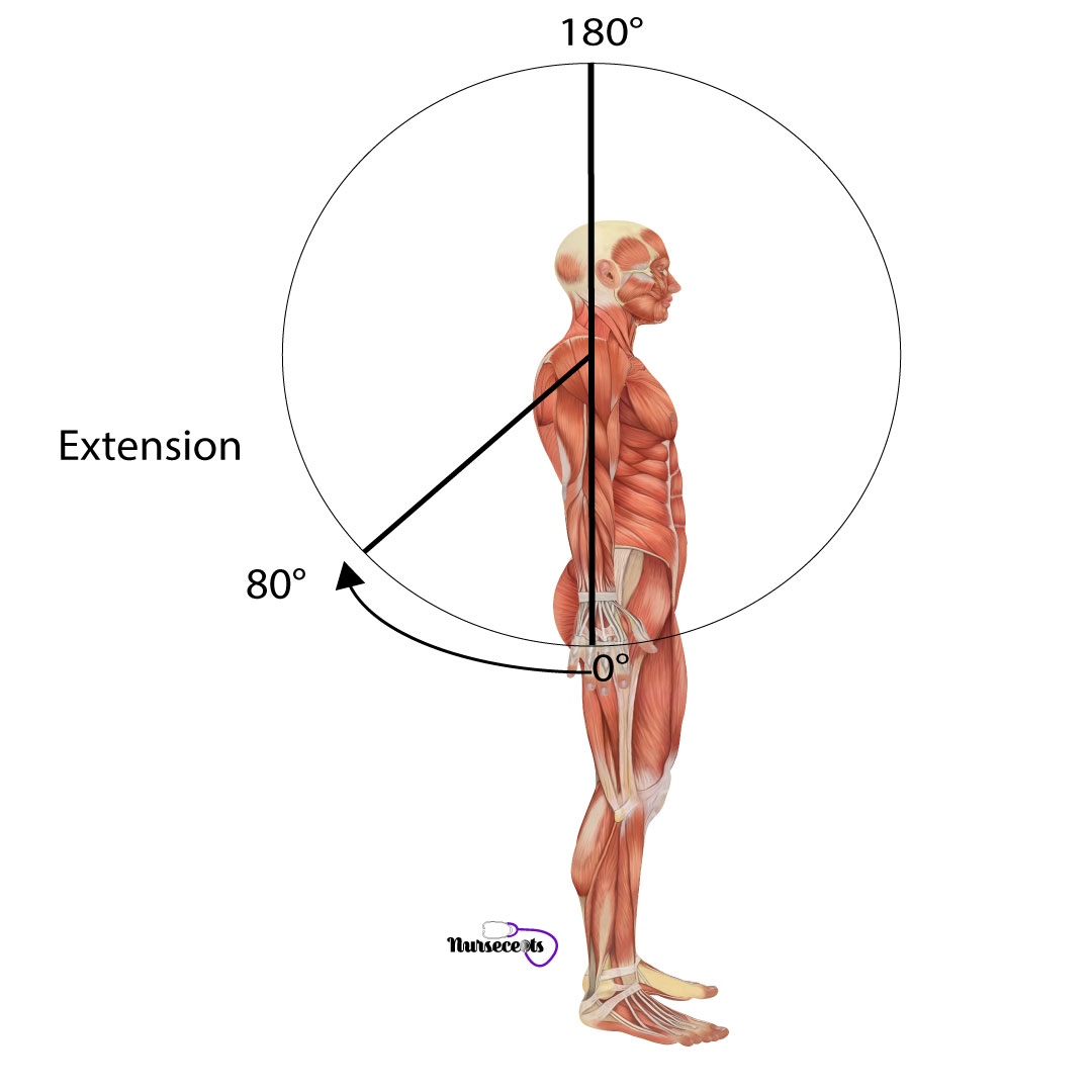 Assessment-of-the-Musculoskeletal-System_Extension