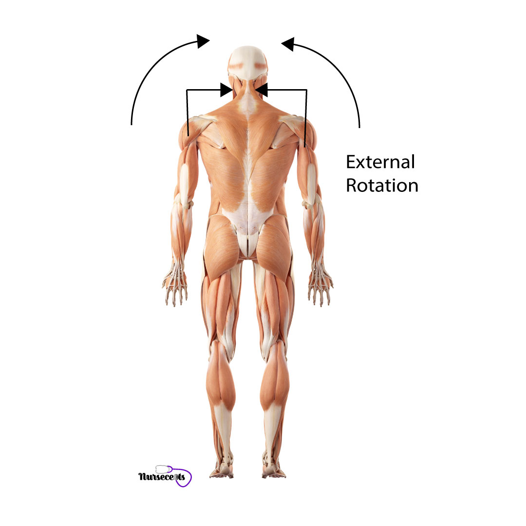 Assessment-of-the-Musculoskeletal-System_External-Rotation