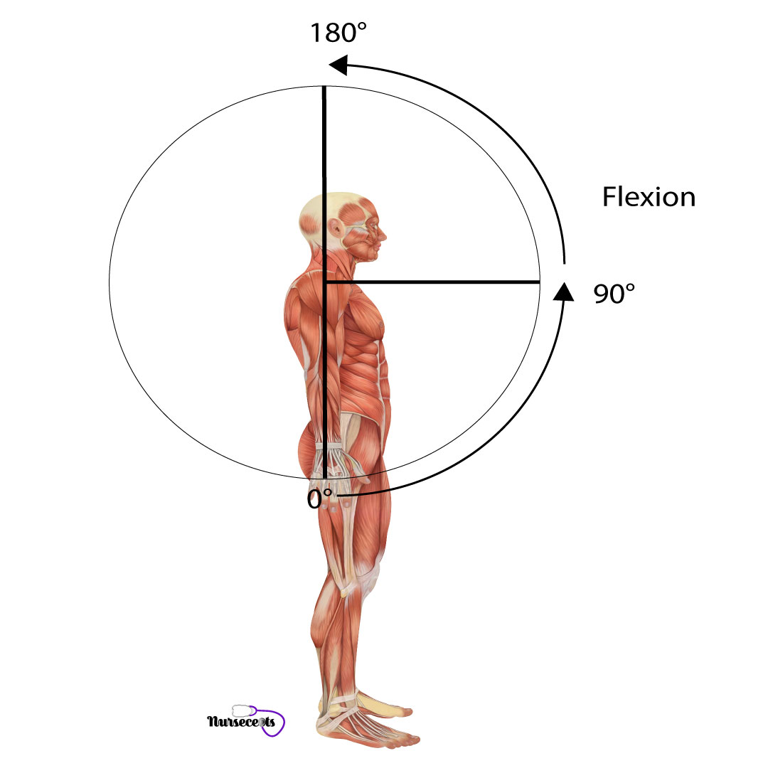 Assessment-of-the-Musculoskeletal-System_Flexion
