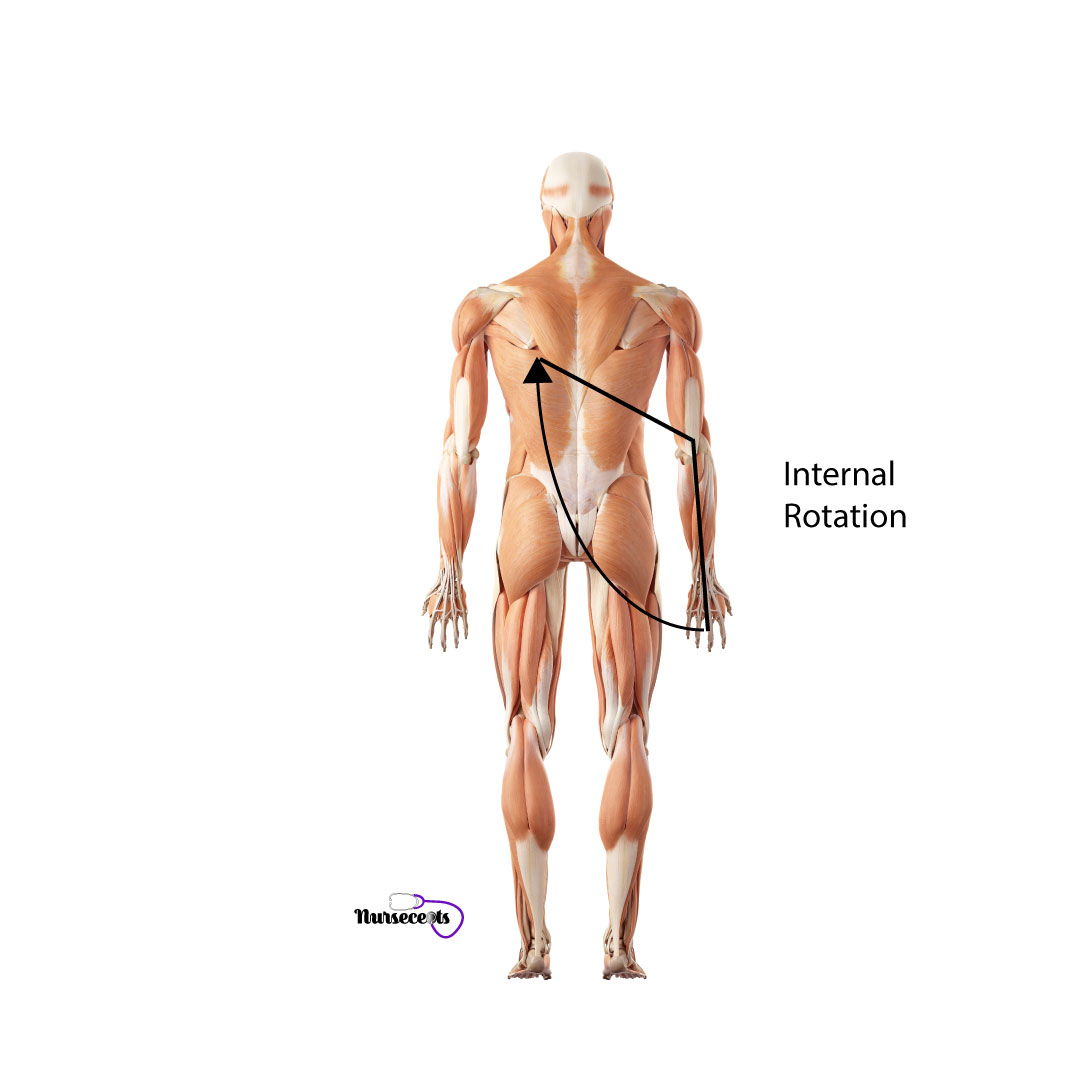 Assessment-of-the-Musculoskeletal-System_Internal-Rotation