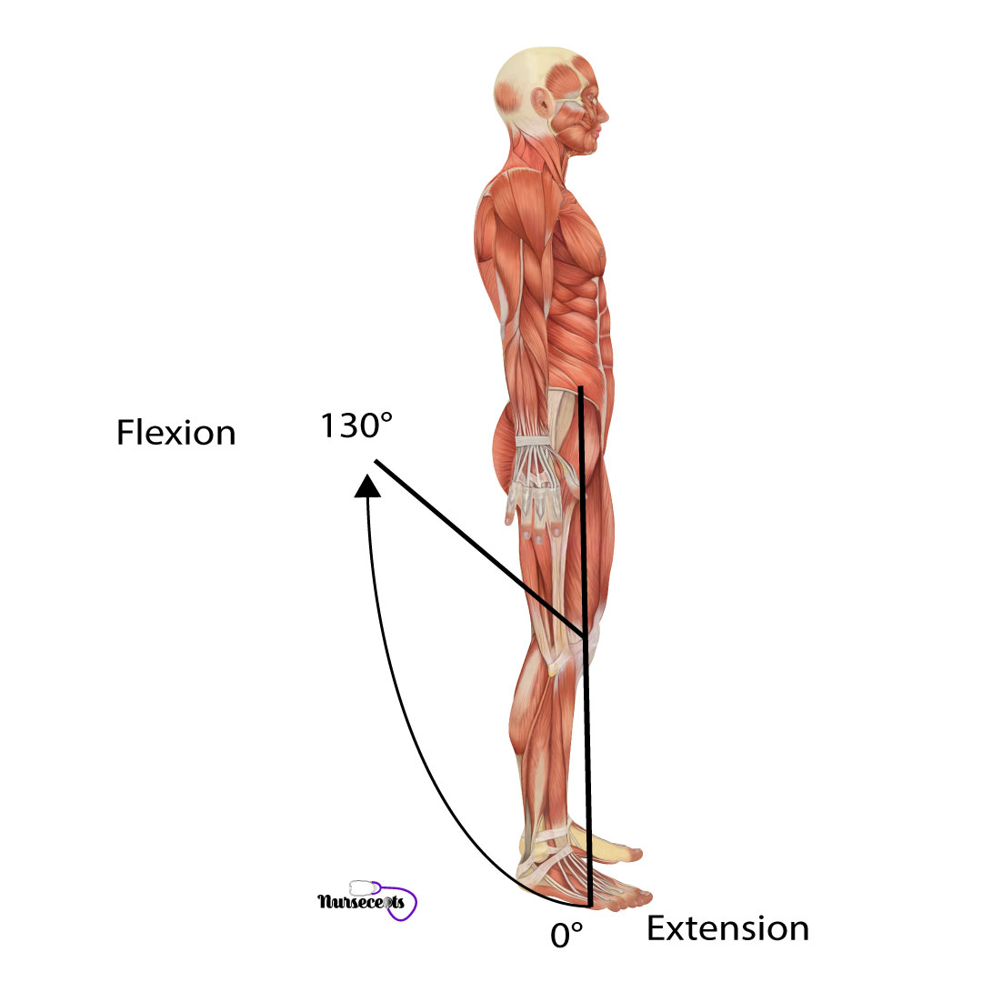 Assessment-of-the-Musculoskeletal-System_Knee-Flexion