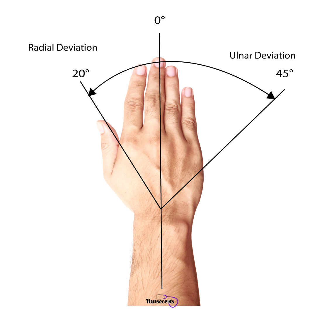 Assessment-of-the-Musculoskeletal-System_Radial-Ulnar-Deviation