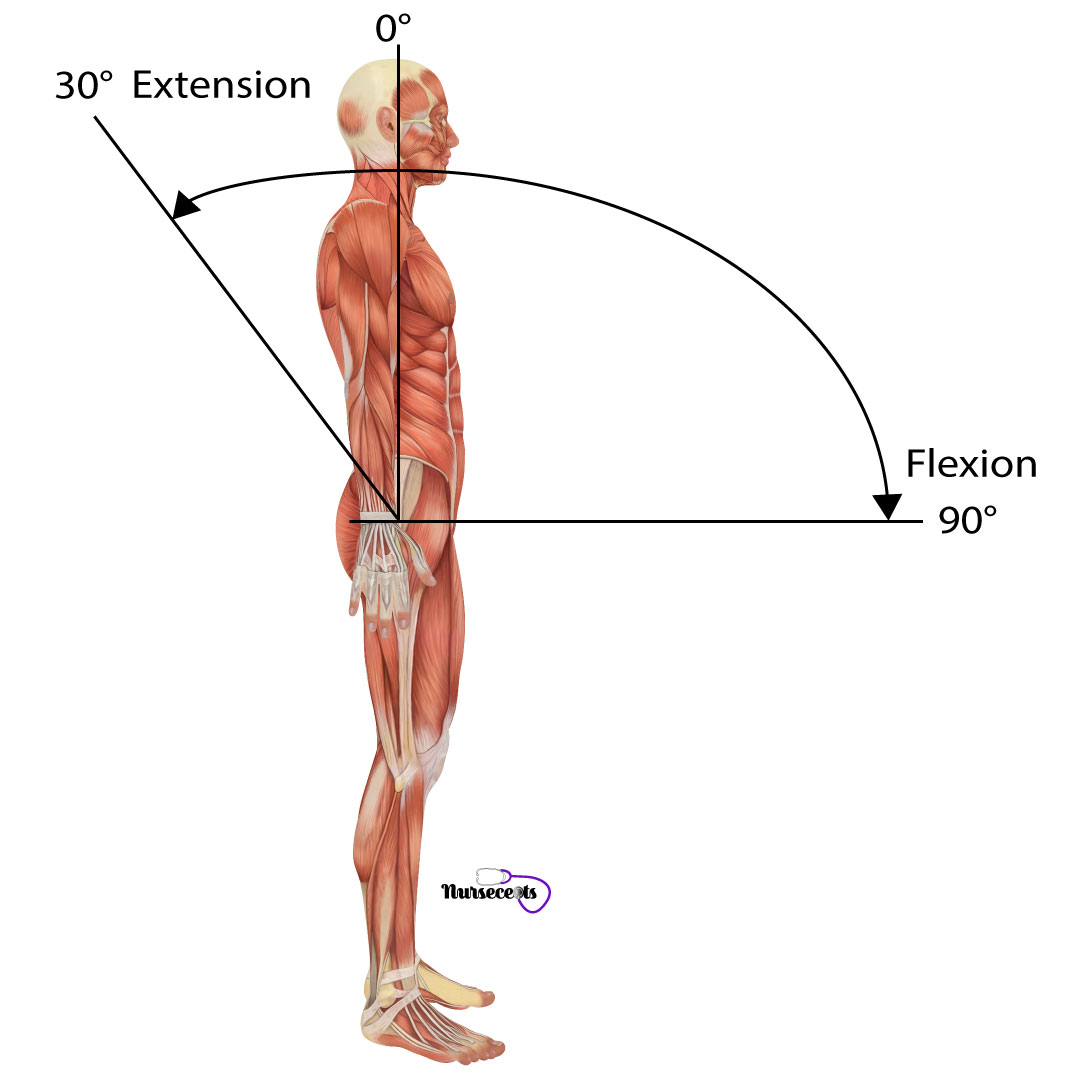 Assessment-of-the-Musculoskeletal-System_Spine-Flexion-Extension