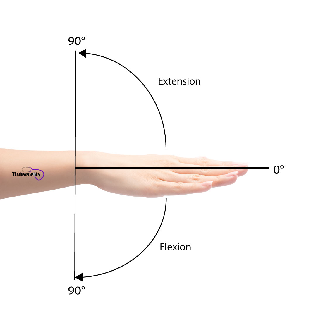 Assessment-of-the-Musculoskeletal-System_Wrist-Flexion-Extension