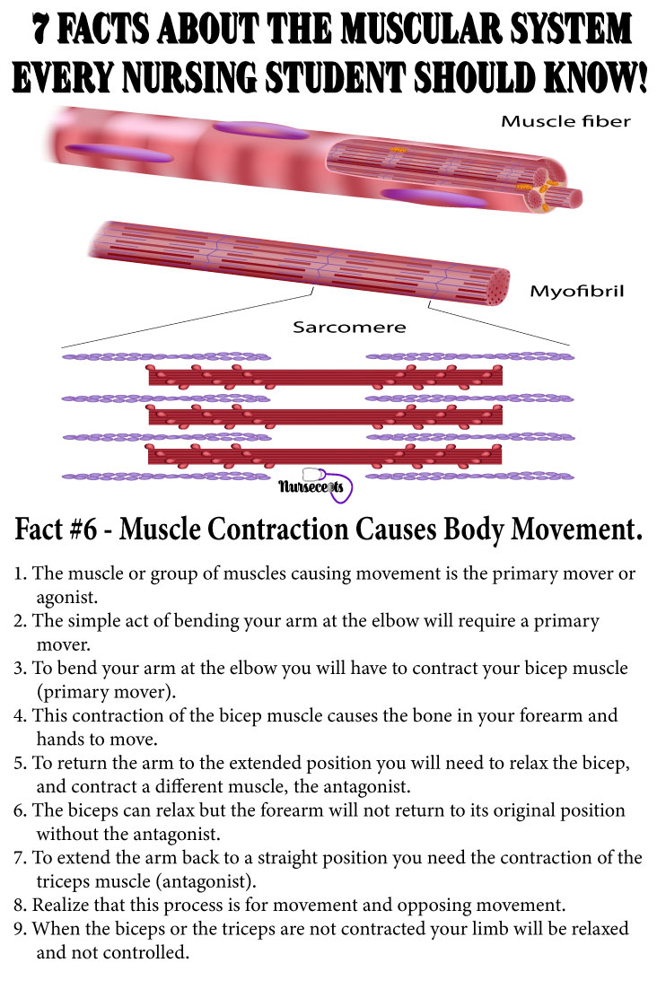 Facts-About-Muscular-System_Body Movement