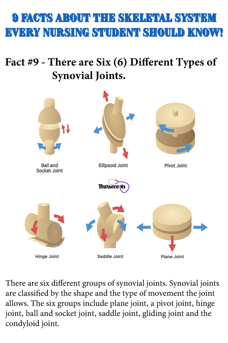 Facts-About-the-Skeletal-System_Synovial Joints