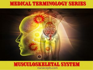 Medical Terminology of the Musculoskeletal System