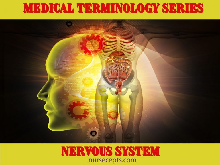 Medical Terminology Nervous System_Feature