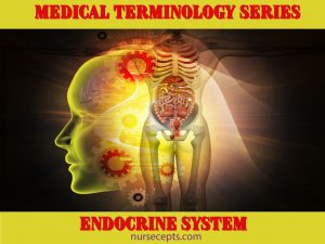 Medical Terminology of the Endocrine System